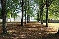 Bois à Aillières-Beauvoir - Wiki takes le Saosnois.jpg