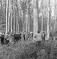 Bosbewerking, arbeiders, bomen, kijken, Bestanddeelnr 251-7960.jpg