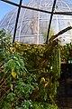 Botanischer Garten der Universität Zürich nach Umbau - 'Bergwald' 2014-03-08 14-56-10.JPG