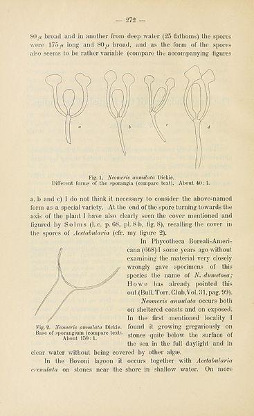File:Botanisk tidsskrift (Page 272) BHL5149207.jpg