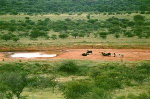 Central District (Botswana) - Waterhole in Serowe