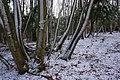 Bousdale Wood - geograph.org.uk - 677393.jpg