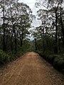 Braeside Trail - panoramio (12).jpg