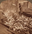 Brailling, taking salmon from the trap for the great canneries, Puget Sound, Washington, from Robert N. Dennis collection of stereoscopic views (cropped).png