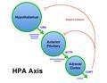 Brian M Sweis HPA Axis Diagram 2012.pdf