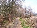 Bridleway past Coldbridge Wood - geograph.org.uk - 1207061.jpg