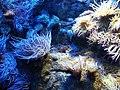 Bristol Aquarium - panoramio (3).jpg