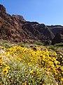 Brittlebush Flowers and the Black Bridge (17219762415).jpg