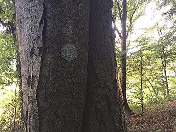 Buche KG Drasing, Gemeinde Krumpendorf.jpg