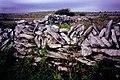 Burren - Stone wall along R480 - geograph.org.uk - 1613830.jpg