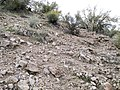Butcher Jones Trail - Mt. Pinter Loop Trail, Saguaro Lake - panoramio (96).jpg