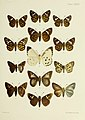 Butterflies from China, Japan, and Corea (19142279930).jpg