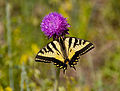 Butterfly (3679139355).jpg