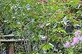 Butterfly Rainforest FMNH 36.jpg