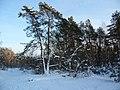 Buxtehude ehemaliger Truppenübungsplatz bei Schnee - panoramio.jpg
