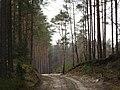 Byłem na Wilczych Ługach małymi krokami idzie wiosna 12 - panoramio.jpg