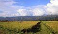 Cánh đồng Mường Lò chụp 2012.jpg