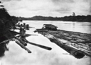 Barito River - A timber raft on the Barito River with housing for the workers (ca.1905-14)