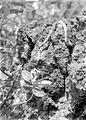COLLECTIE TROPENMUSEUM Zeeslang en Asclepia op een rots Vogeleiland TMnr 10027482.jpg
