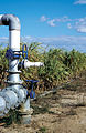 CSIRO ScienceImage 4191 Check valve to control the flow of irrigation water to sugar cane crop at Brandon near Ayr in the Burdekin Irrigation Area SE of Townsville QLD.jpg