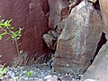 California condor chick -871 is seen via nest camera. (34828089522).jpg