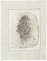 Camelus dromedarius - ingewanden - 1700-1880 - Print - Iconographia Zoologica - Special Collections University of Amsterdam - UBA01 IZ21600015.tif