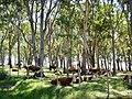 Campo - Paso de los Toros - panoramio.jpg