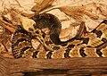 Canebrake Rattlesnake 085.jpg