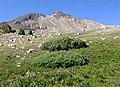 Cardinal Mountain.jpg