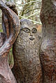 Carved Tree Seat Face (7006218169).jpg