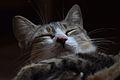 Cat face 08.jpg