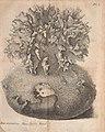 Catalogue systématique et raisonné des curiosités de la nature et de l'art, qui composent le cabinet de M. Davila (1767) (14763747715).jpg