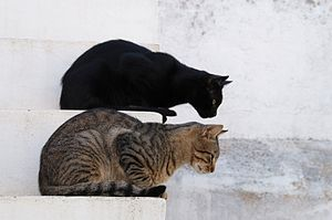 English: Young street cats, Portugal.
