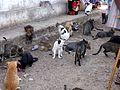 Cats at the fish market - Flickr - gailhampshire.jpg