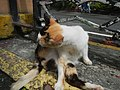 Cats in t1302Cats in the Philippines 17.jpg