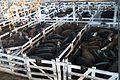 Cattle market, 24 July 2009.jpg