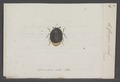 Cercyon - Print - Iconographia Zoologica - Special Collections University of Amsterdam - UBAINV0274 014 11 0008.tif