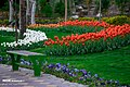 Chamran park 2020-04-06 09.jpg