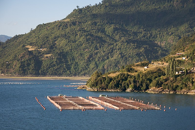 Archivo:Chilean farmed salmon farms - panoramio.jpg