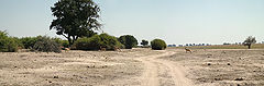 Chobe National Park Riverfront Tracks.jpg