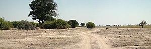 Chobe National Park - Image: Chobe National Park Riverfront Tracks