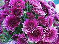 Chrsanthemum(Purple).jpg