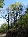 Chuchelský háj, Malá Chuchle, neznačená cesta z rozcestí u pramene, stromy.jpg