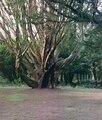 Clontarf park.tif