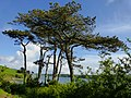 Coast path between Trebah Garden and Falmouth - panoramio.jpg