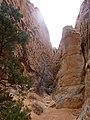Cohab Canyon , DyeClan.com - panoramio (9).jpg