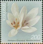 Colchicum mirzoevae on Armenian stamp (cropped).jpg