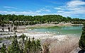 Columbus Limestone (Middle Devonian; abandoned quarry, Kelleys Island, Lake Erie, Ohio, USA) 20 (48655976912).jpg