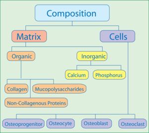 Px Composition Of Bone