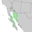 Condalia globosa range map 4.png